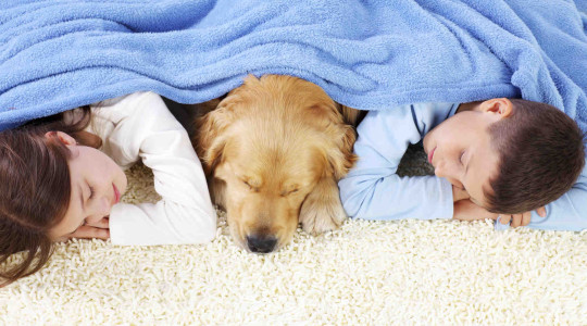 Boy, girl and dog sleeping covered with a blanket.